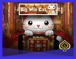 Machine à sous Big Win Cat bientôt sur les casinos Play'N Go